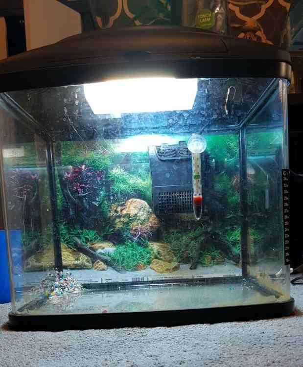 Interpet curved glass Aquarium for sale